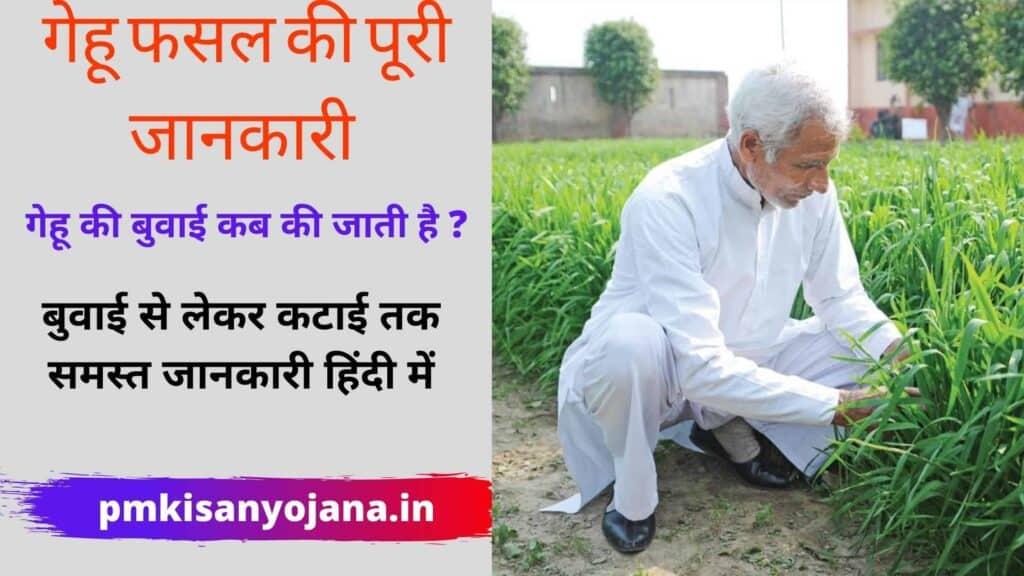 gehu ki kheti ki jankari hindi